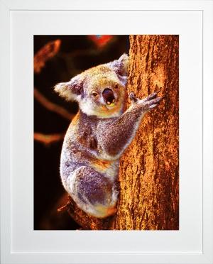 Koala-in-flame